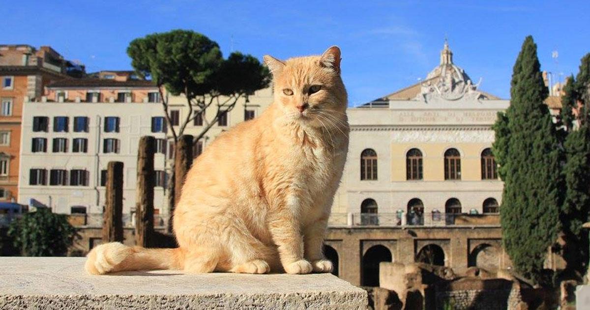 La festa del gatto, animale tanto sacro a Diana e ai romani